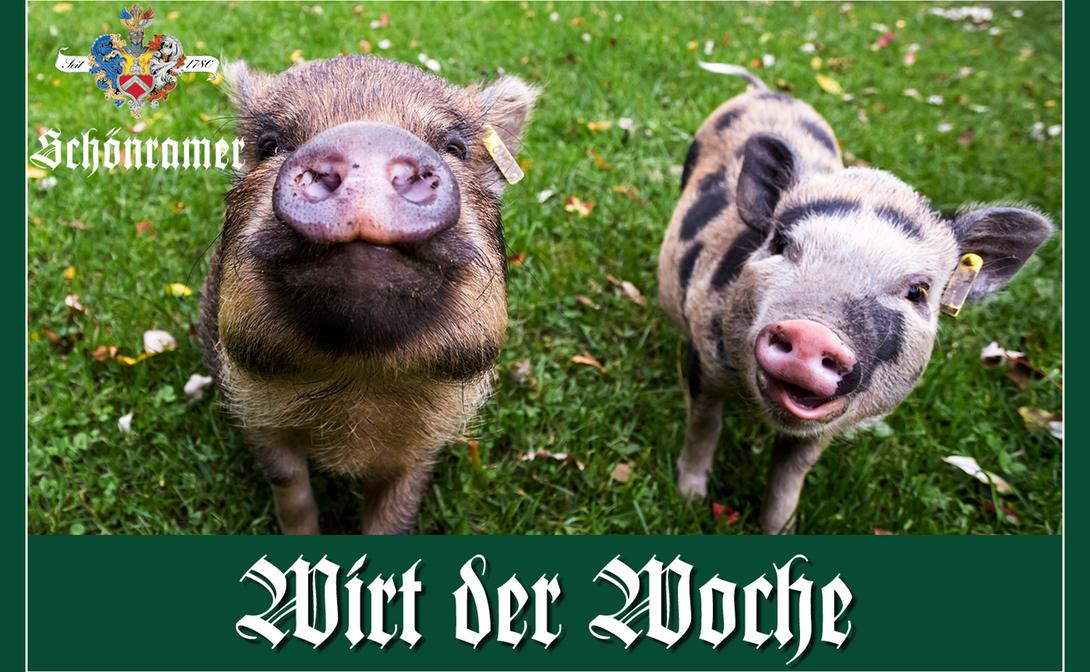 Fuxn Schweindl